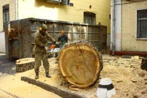Стоимость вырубки деревьев