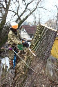 Спил деревьев в Ивантеевке