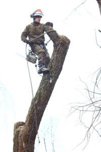 Спилить дерево в Химках