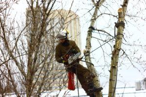 Спилить дерево Мытищи
