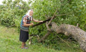 Порядок вырубки деревьев