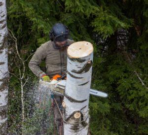 Удаление деревьев в на кладбище