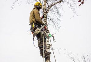 Удалить дерево Кубинка