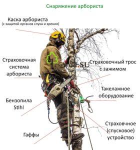 Вырубка деревьев арбористами
