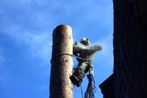 Спил деревьев в Химках